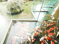 hotelhatta-fish.png